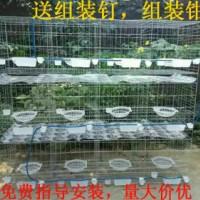三层鸽笼白鸽养殖笼厂家直销