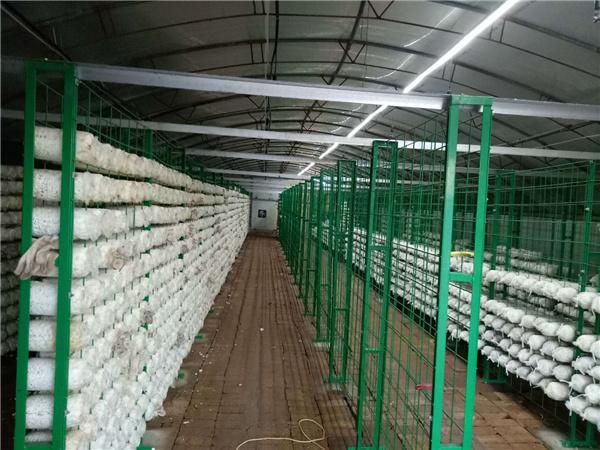 大棚蘑菇网架食用菌种植网格架厂家直销
