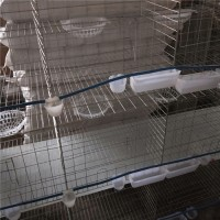 三层鸽笼厂家出售规格齐全大量现货